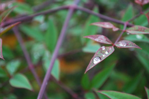 葉っぱの水玉