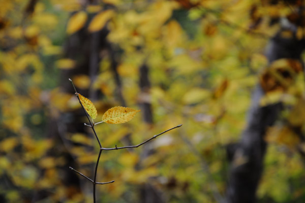 三段峡の紅葉を中望遠でその2