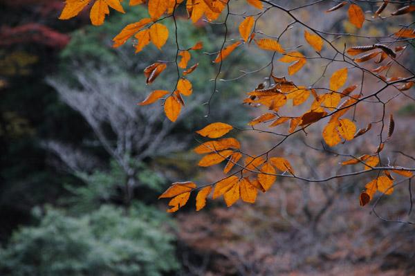 三段峡の紅葉を中望遠でその3