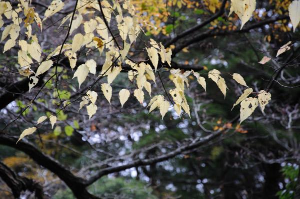 三段峡の紅葉を中望遠でその4