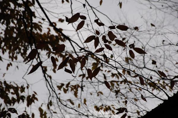 三段峡の紅葉を中望遠でその5