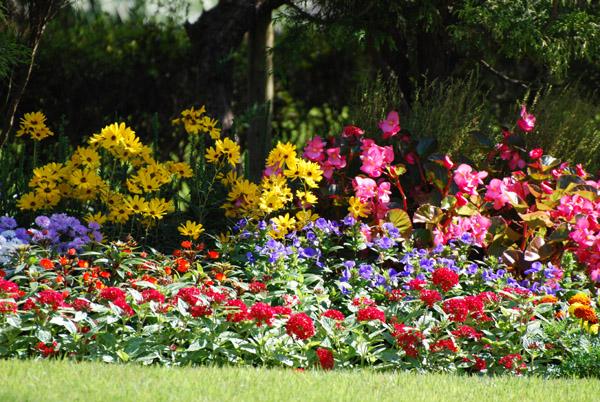 たくさんのお花