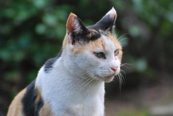野良猫その3