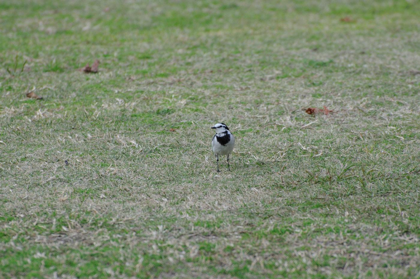 きょろきょろな鳥さん
