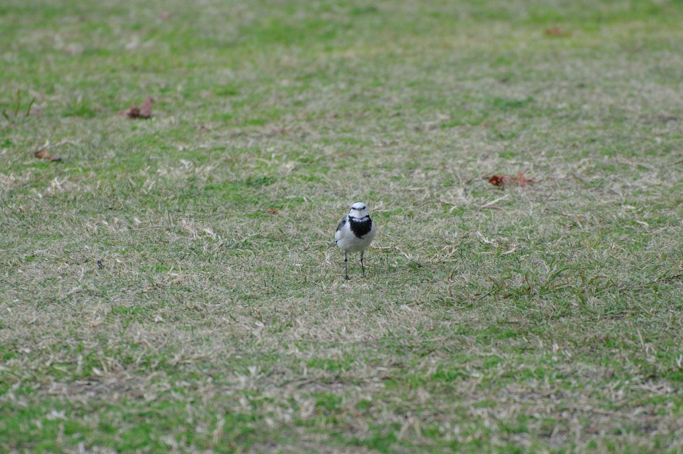 カメラ目線の鳥さん