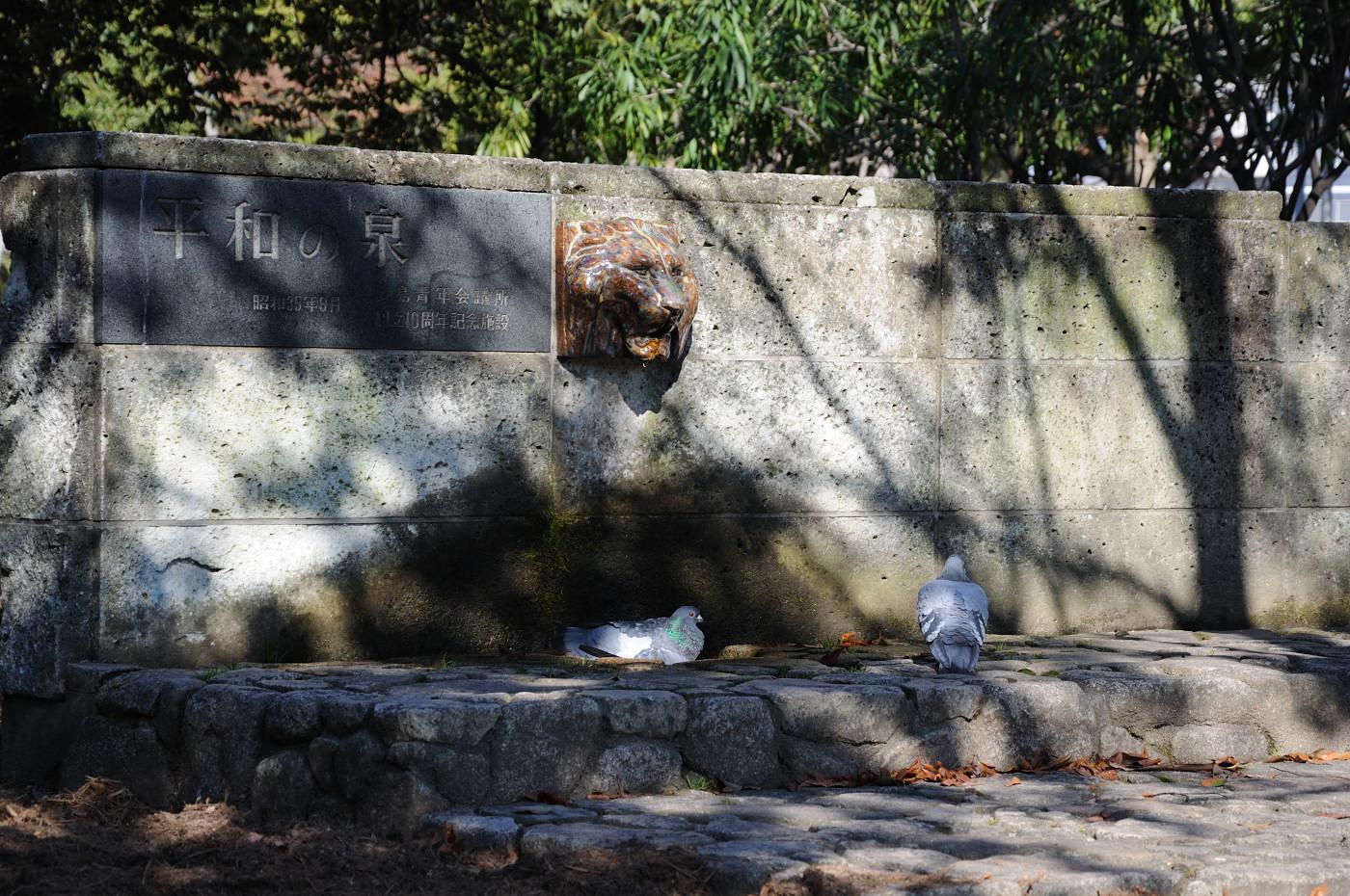 平和の泉を使って水浴びのハトです