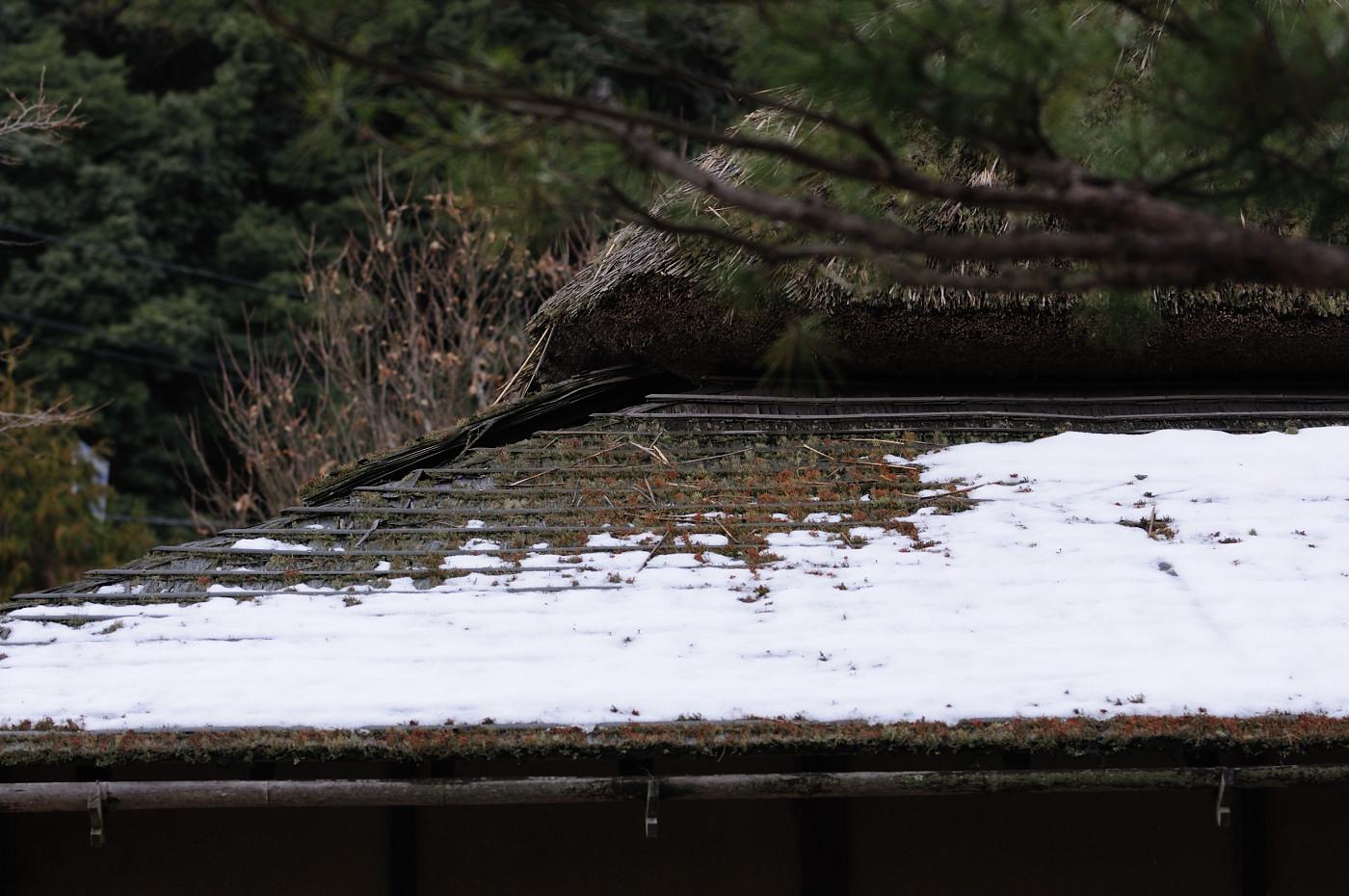 屋根には大きく育ったコケ
