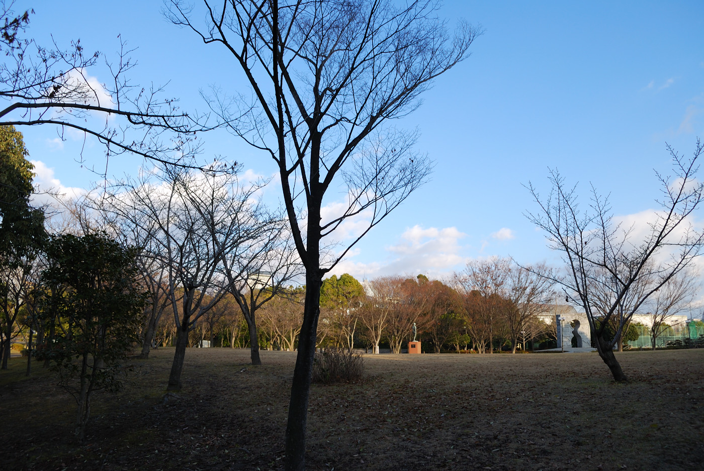 公園を広角で