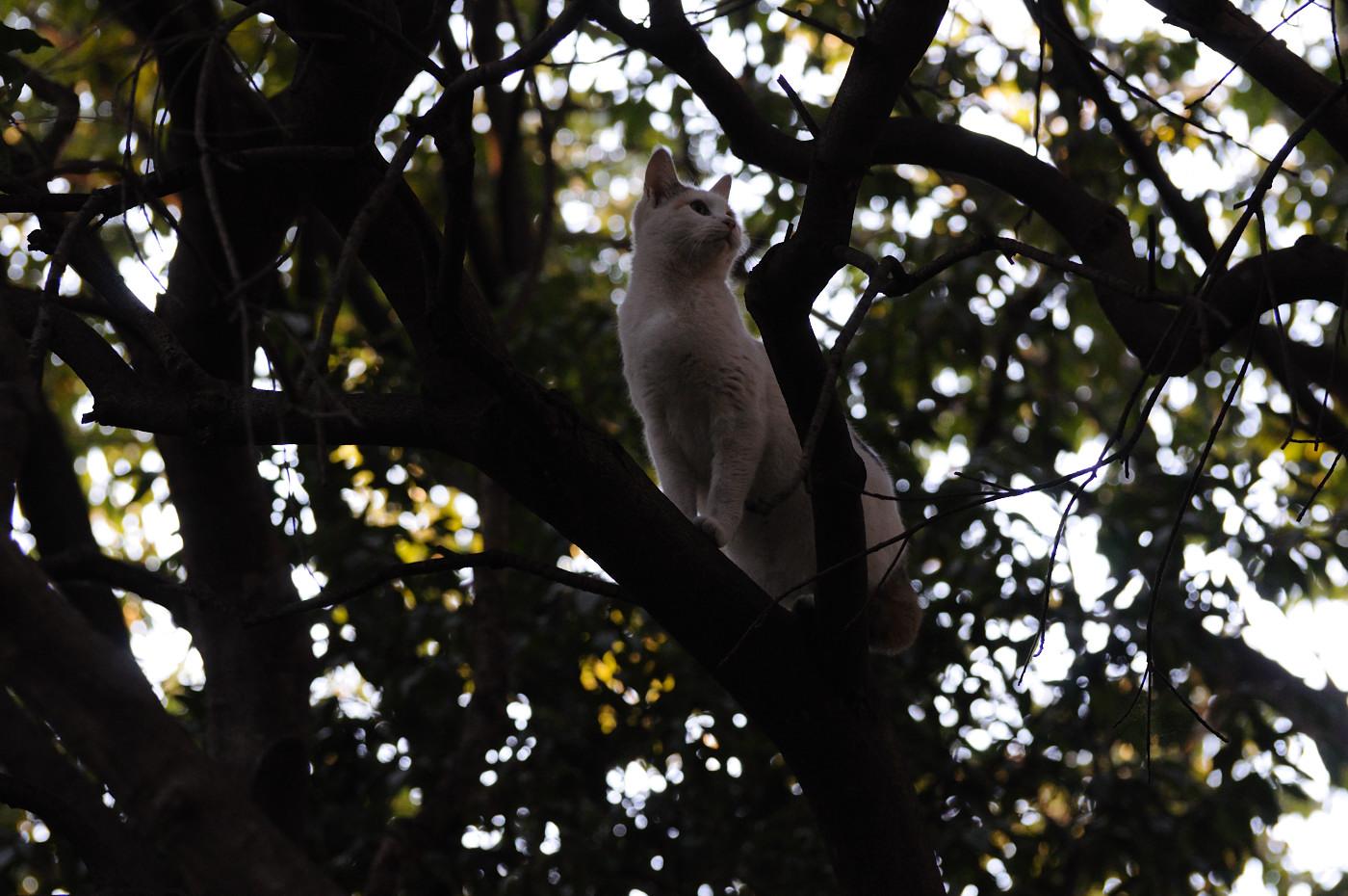 木の上で周りを見るにゃんこ