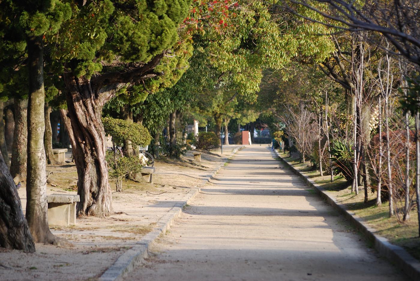 広島城の堀の外側の公園のような道
