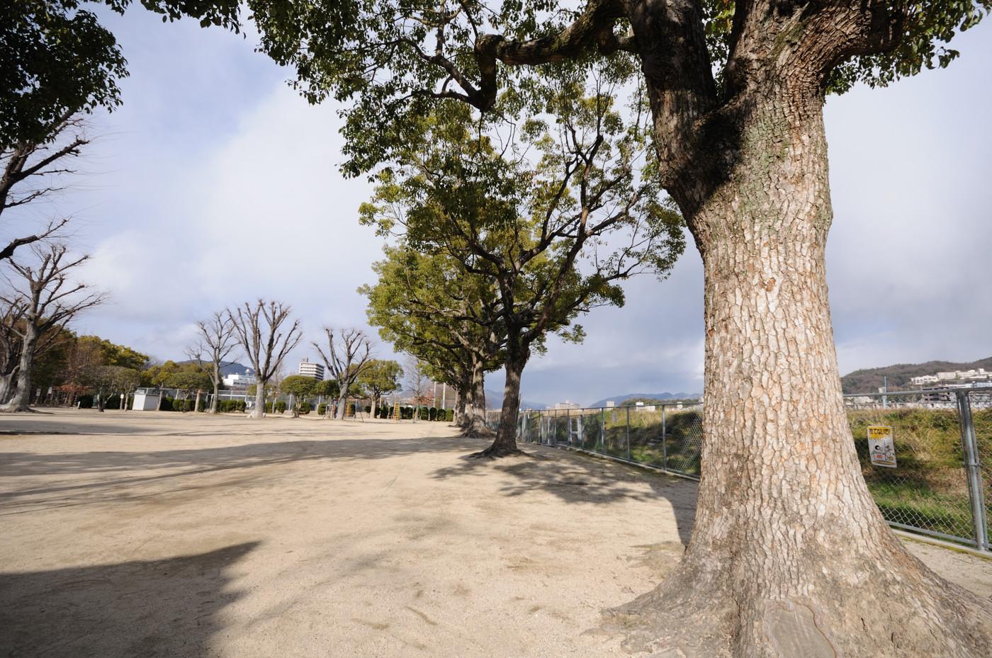 公園に並ぶ木