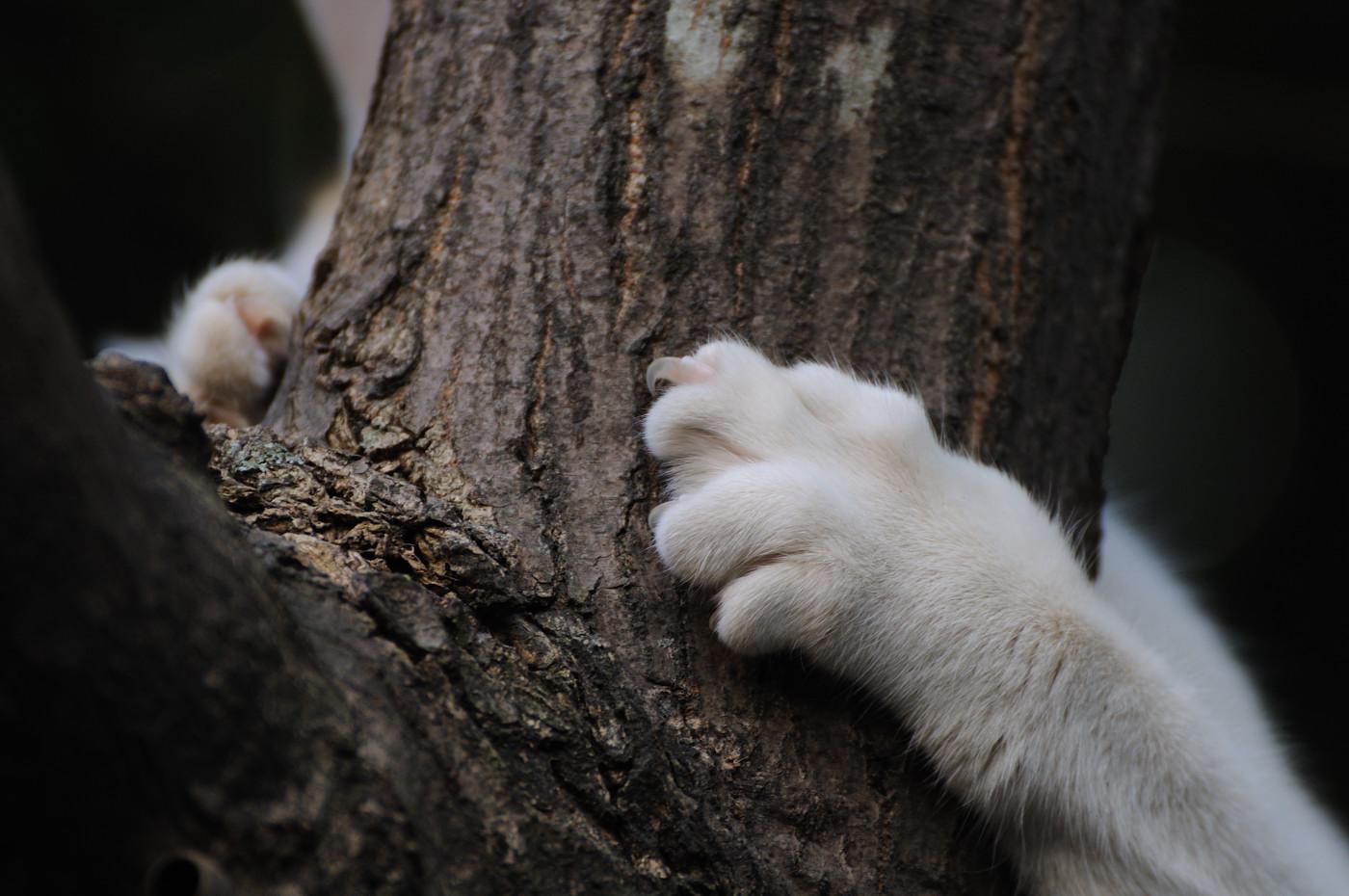 爪をひっかけて木に登っているにゃんこ