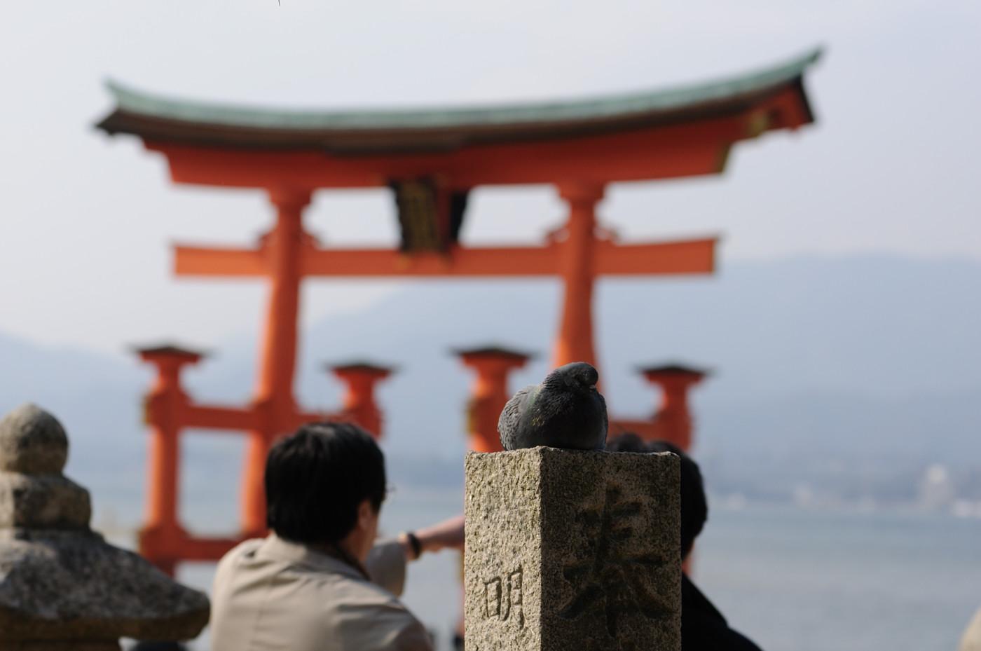 厳島神社の大鳥居その3