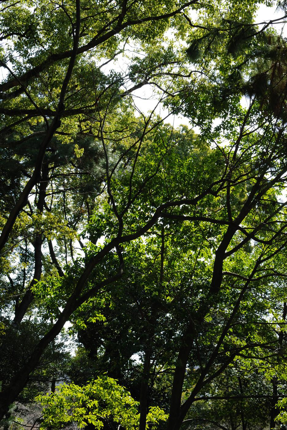 縮景園の風景その2