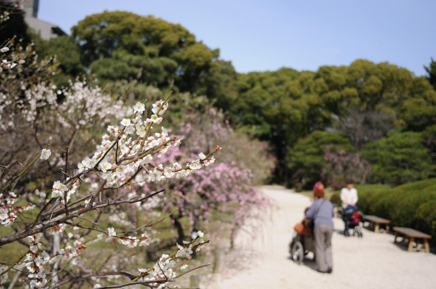縮景園の梅の花をボカして