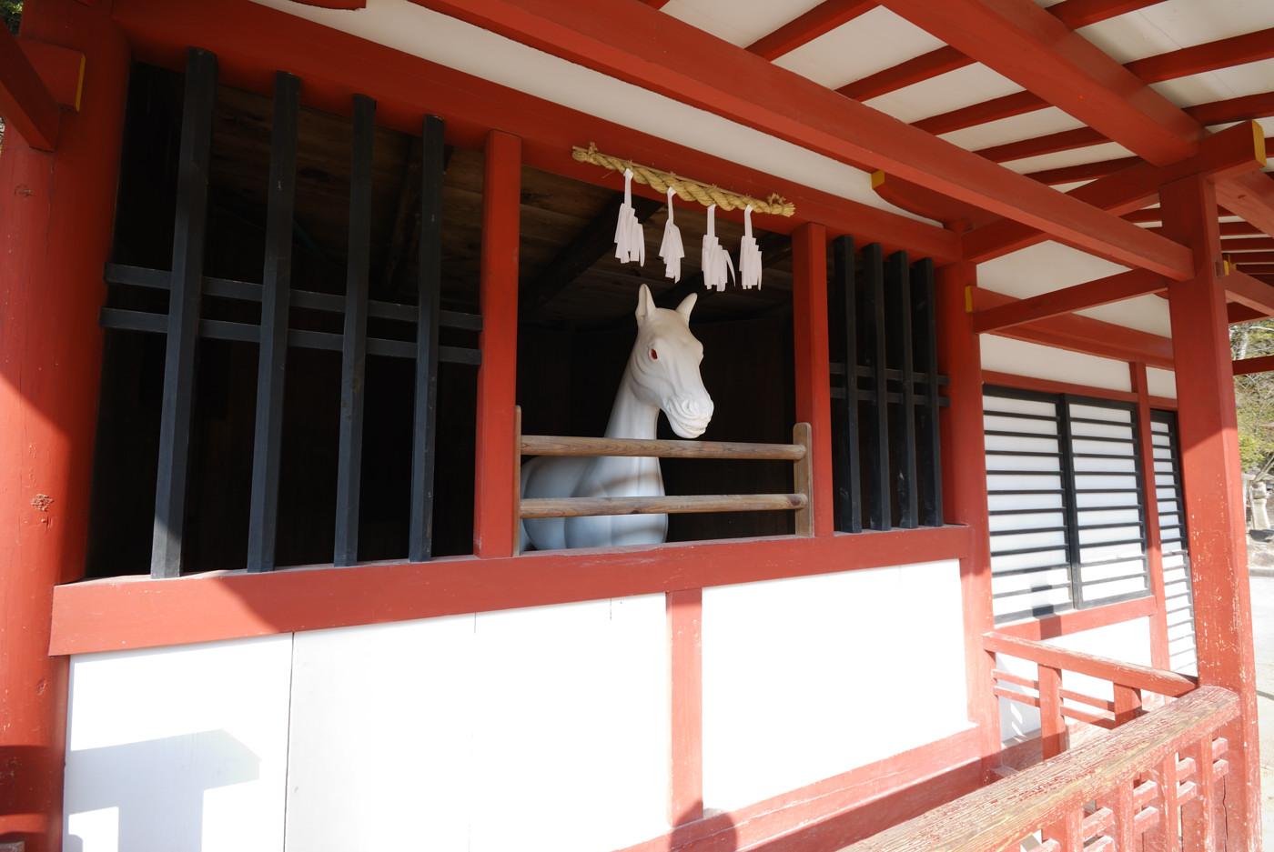 宮島のお馬さんです