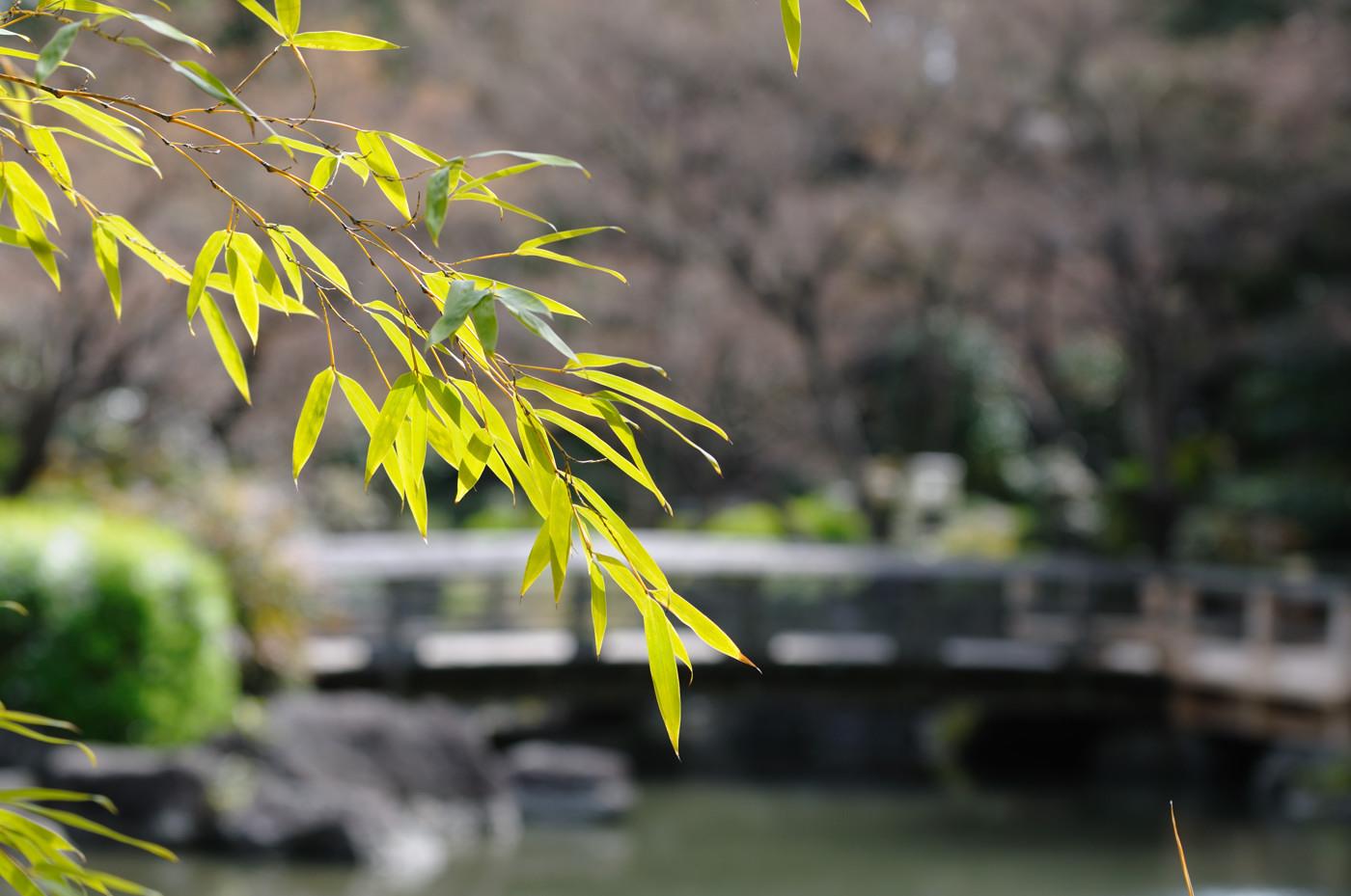 池にかかる小さな橋