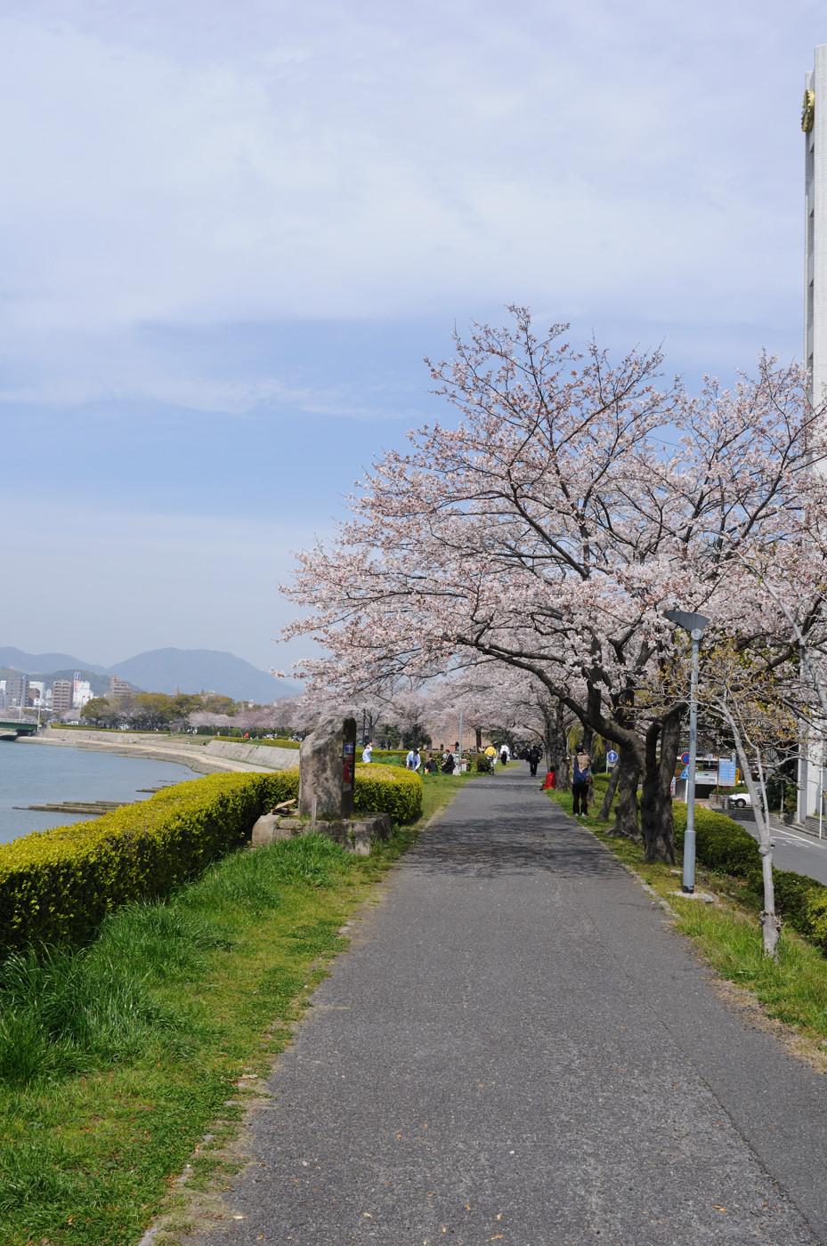 川沿いの桜並木~