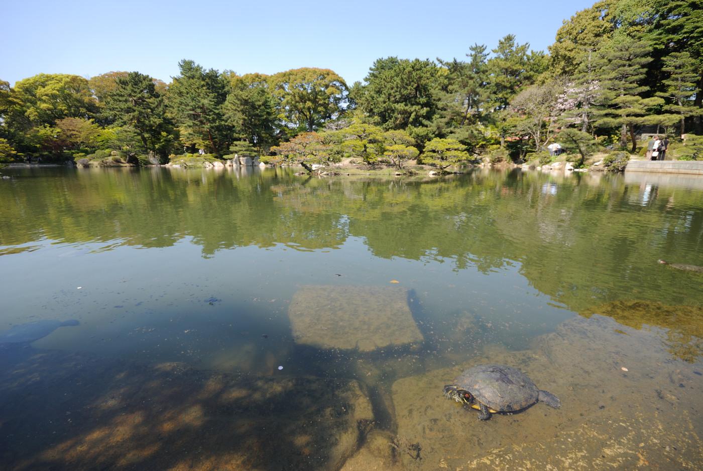 池に亀さんの居る風景その1