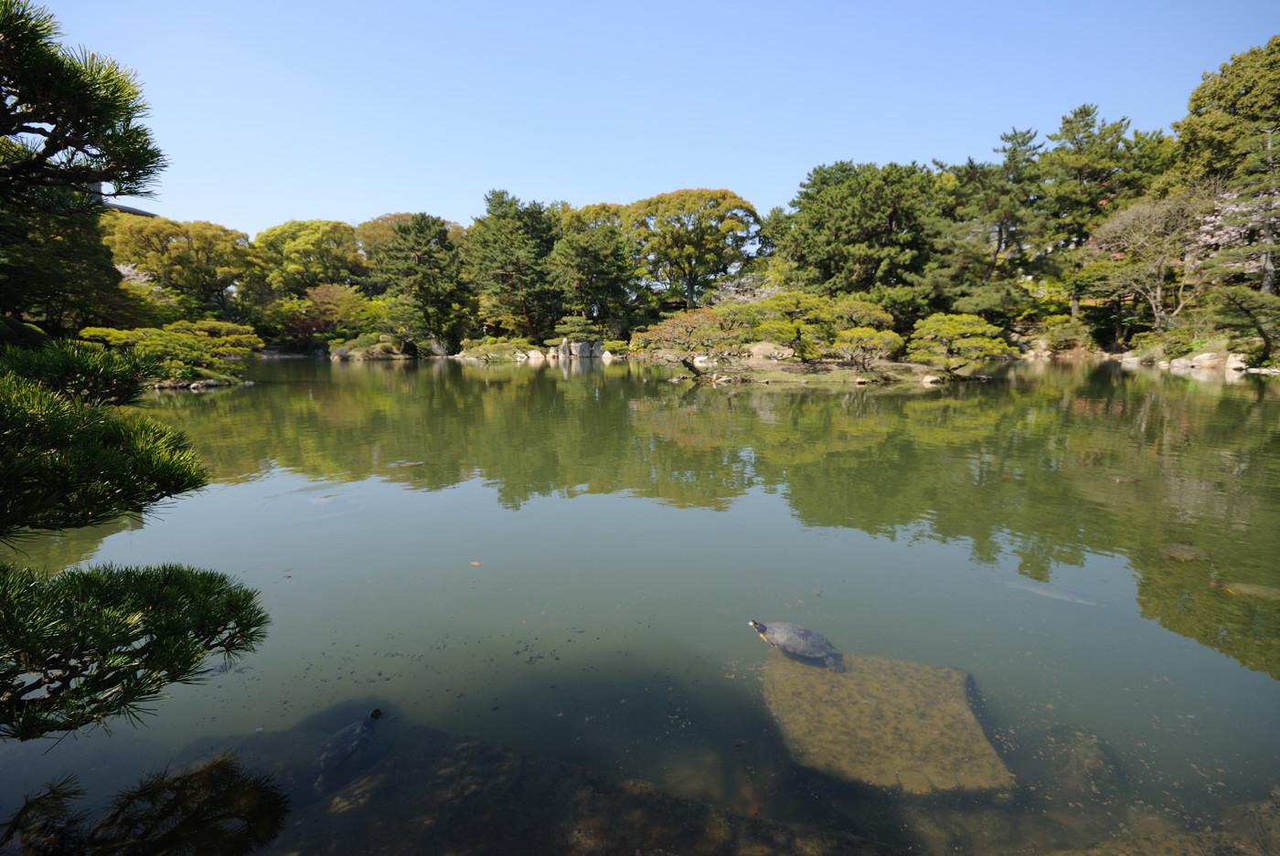 池に亀さんの居る風景その2