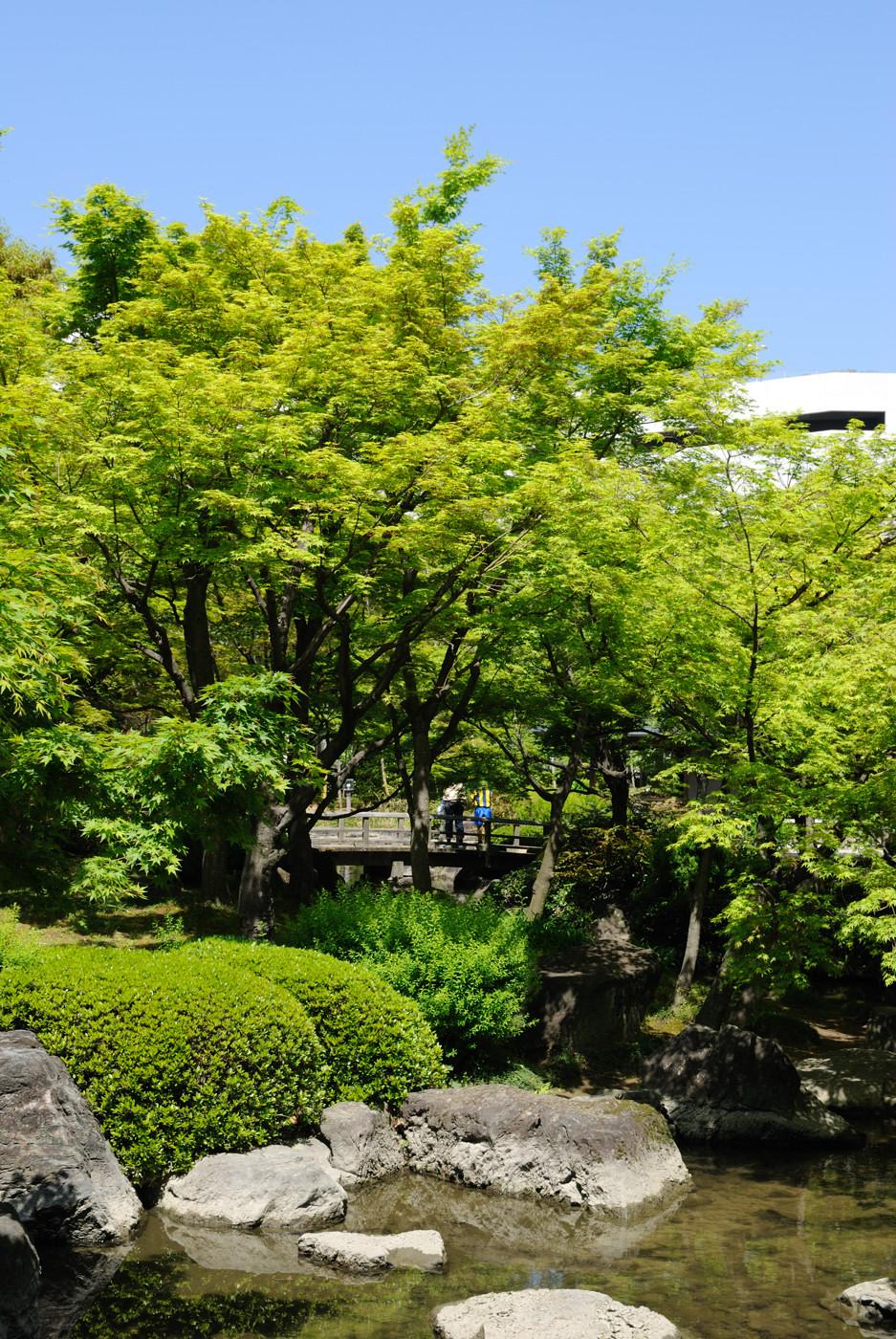 キレイな緑と池