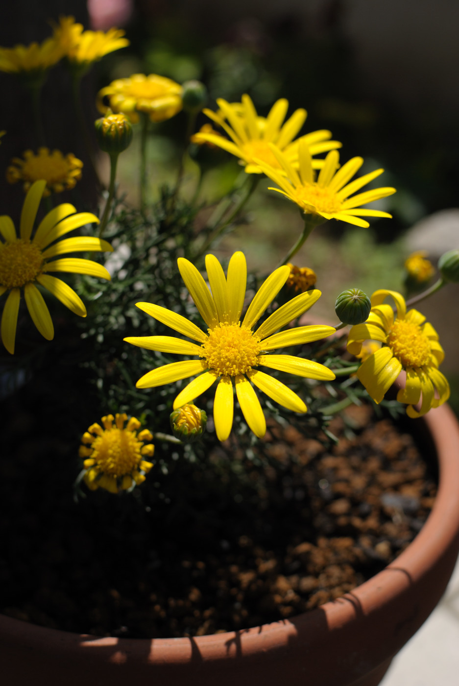 玄関の前のお花