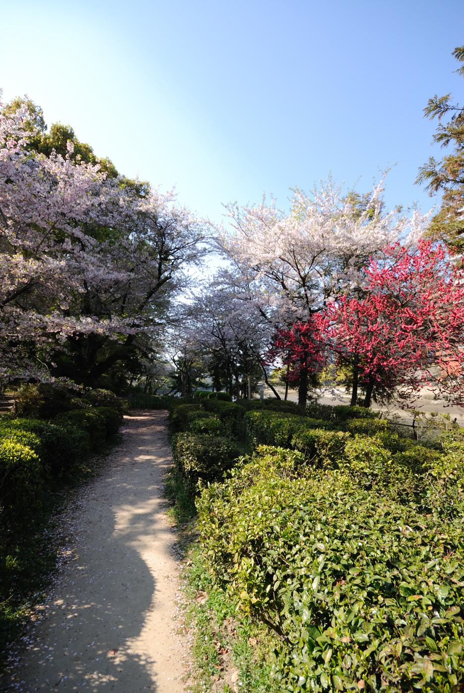 いろいろな木の花たち