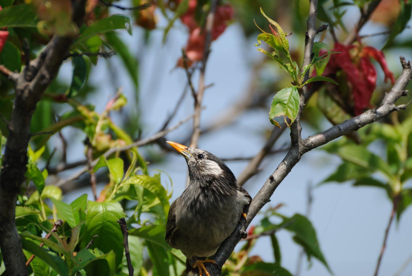 この鳥さんの写真は好みです