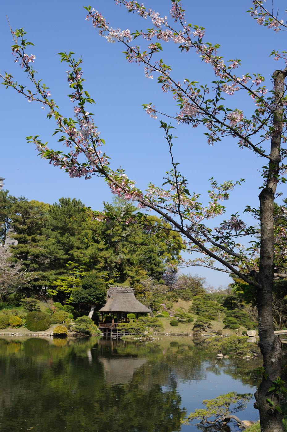 縮景園の池の写りこみ