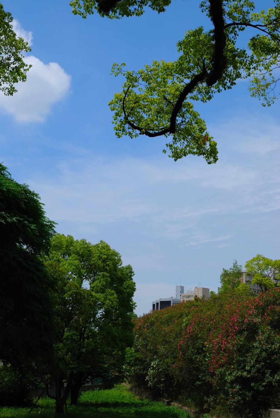 キレイな雲と青空~