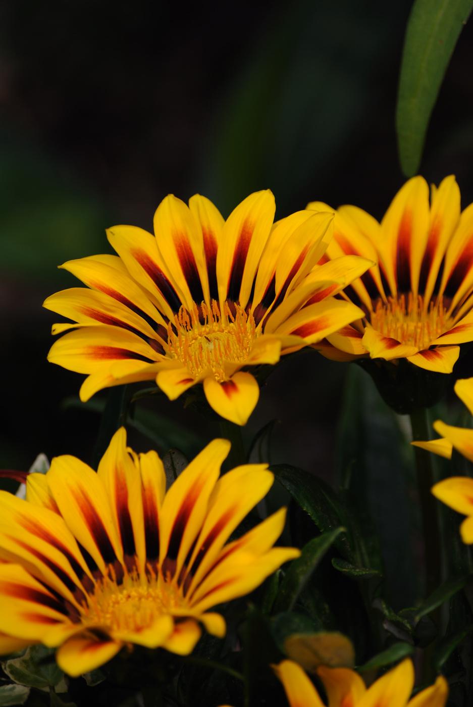 きれいな色の花でした