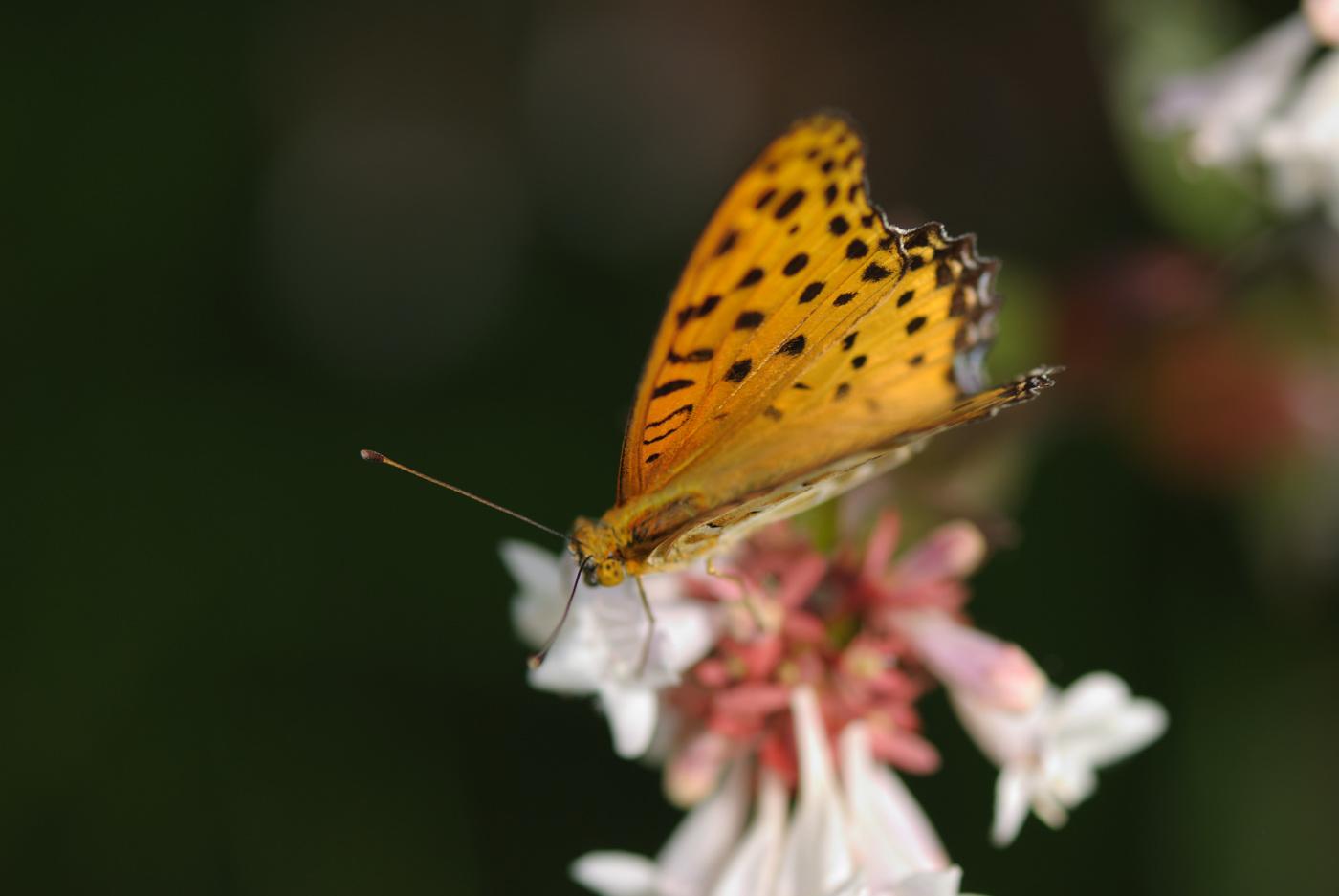 小さめの蝶よりもさらに小さいお花が~