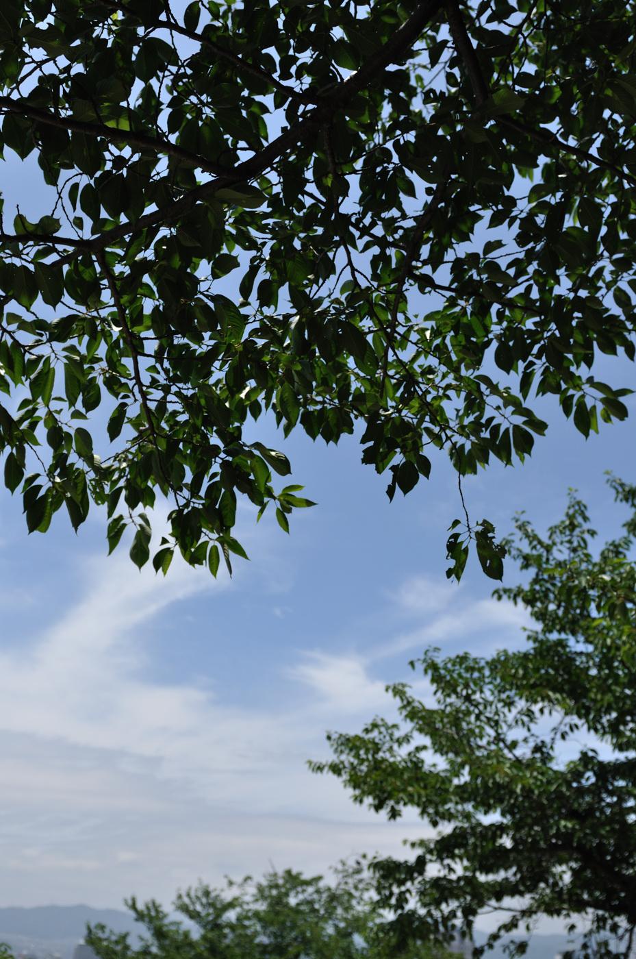 緑と雲その1