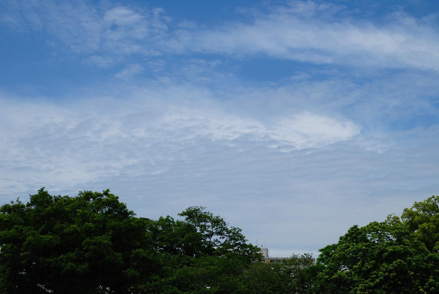 キレイな雲だじぇ