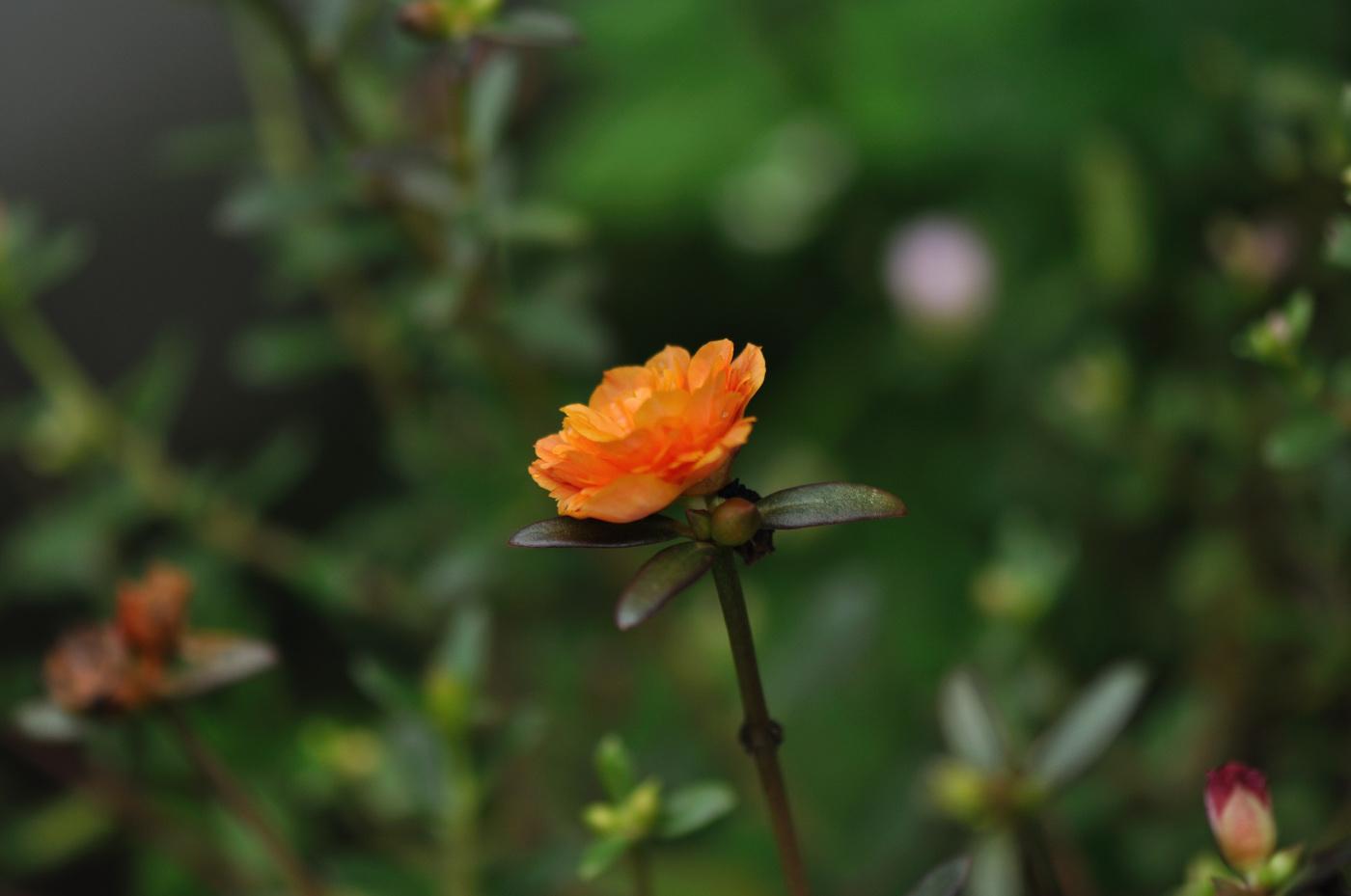 小さなお花を
