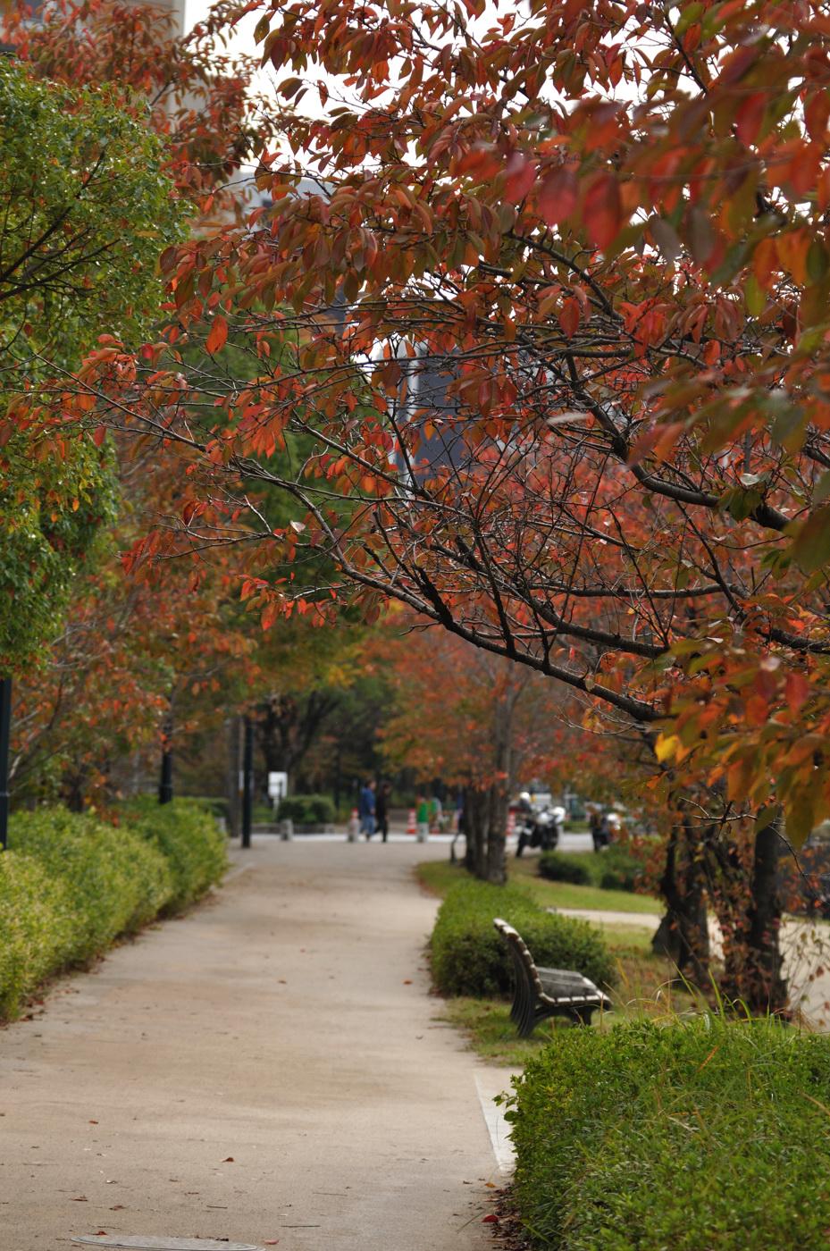 秋とベンチと・・・