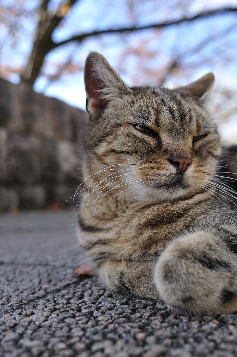 眠そうなにゃんこ