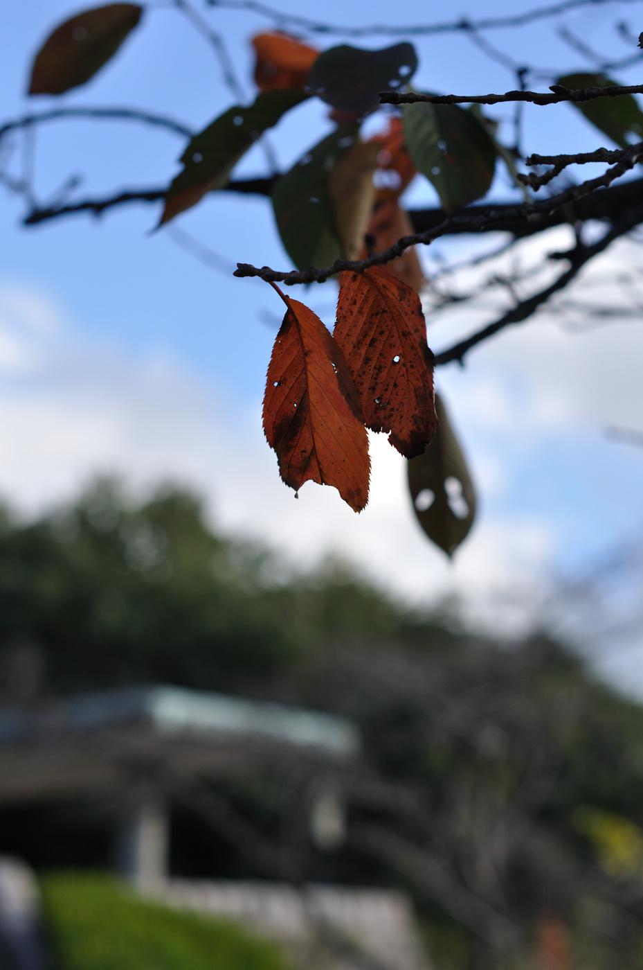 秋とボケその2