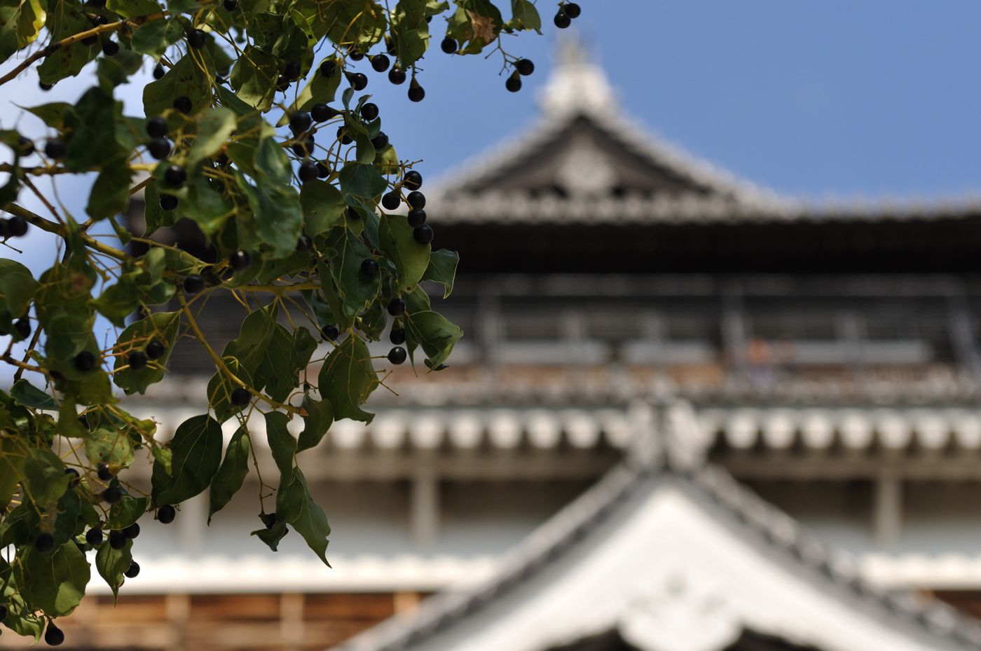 なにかの実と広島城