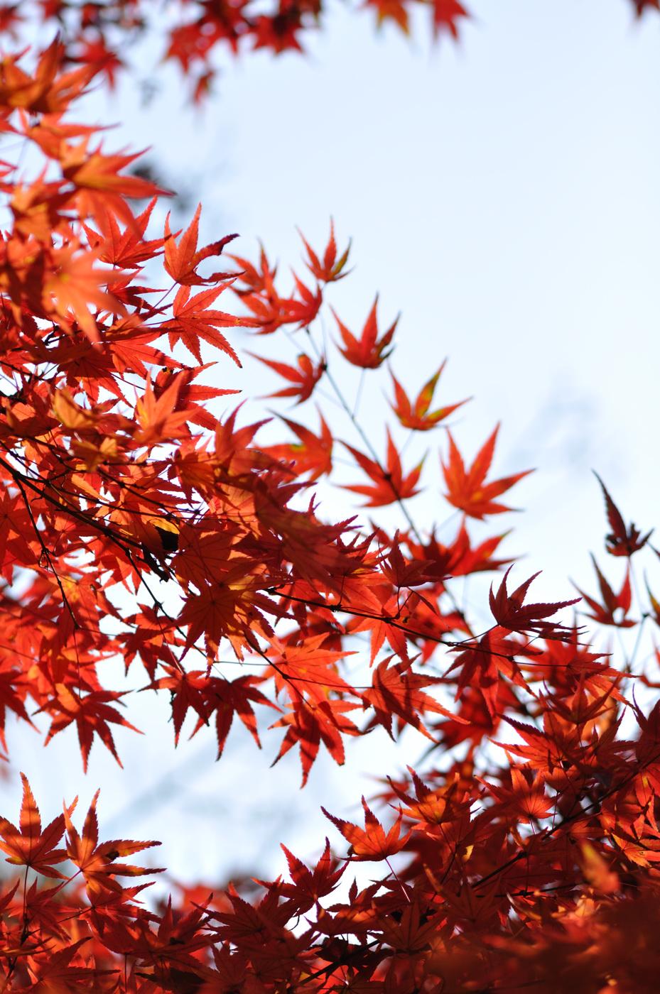 望遠気味で紅葉だじぇ