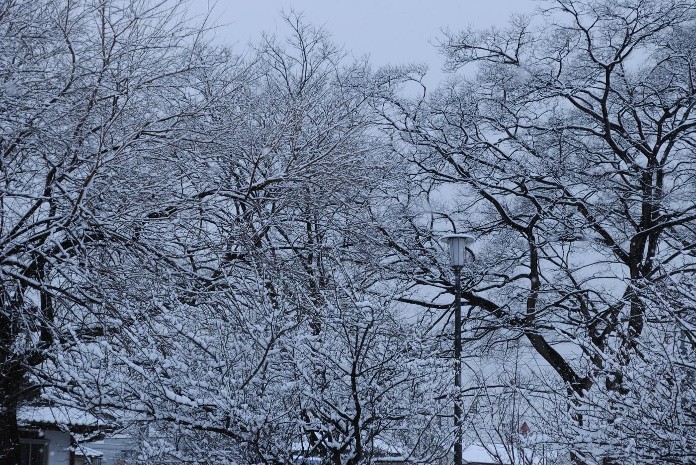 街燈と雪景色