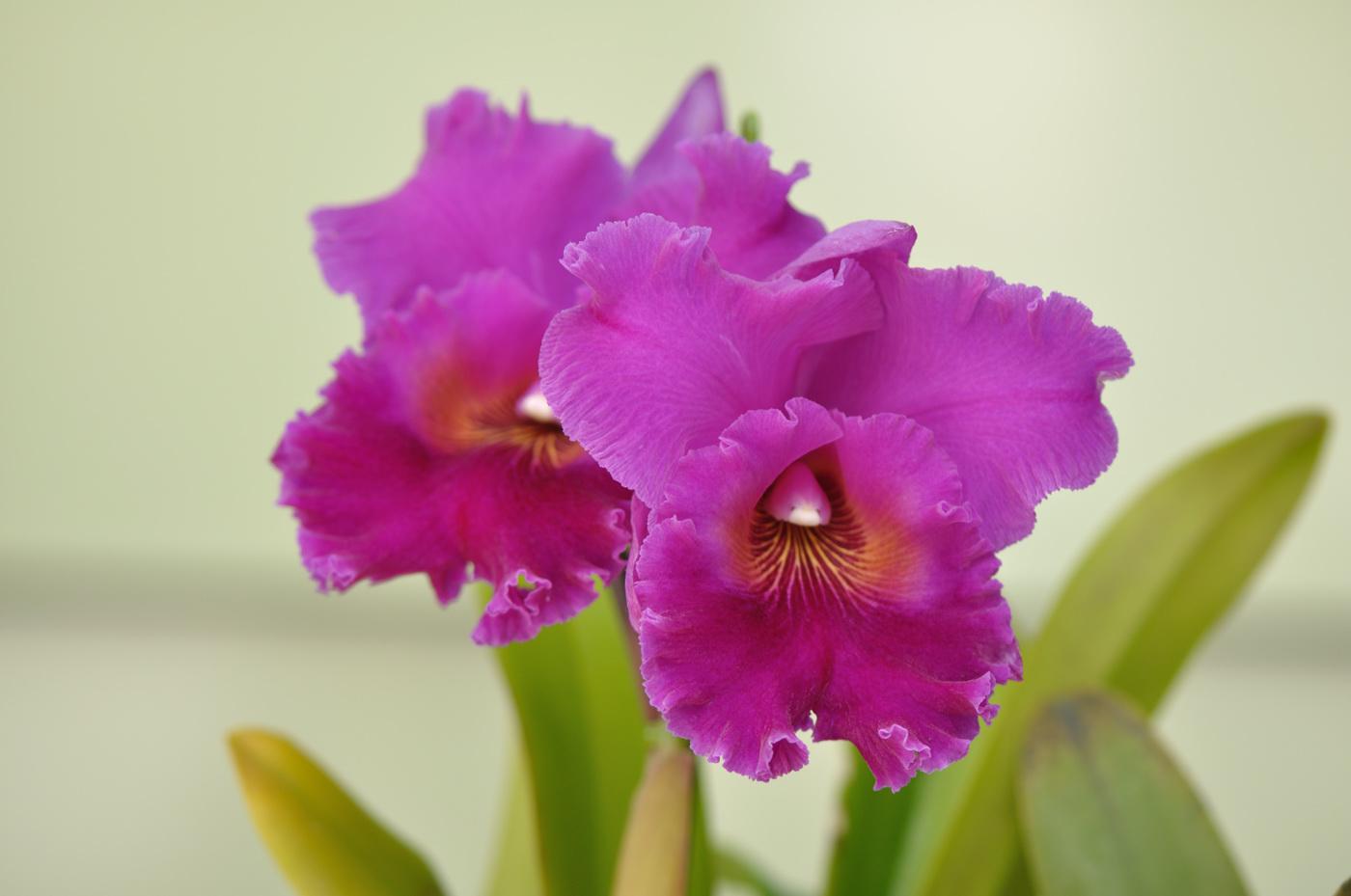 珍しいランの花