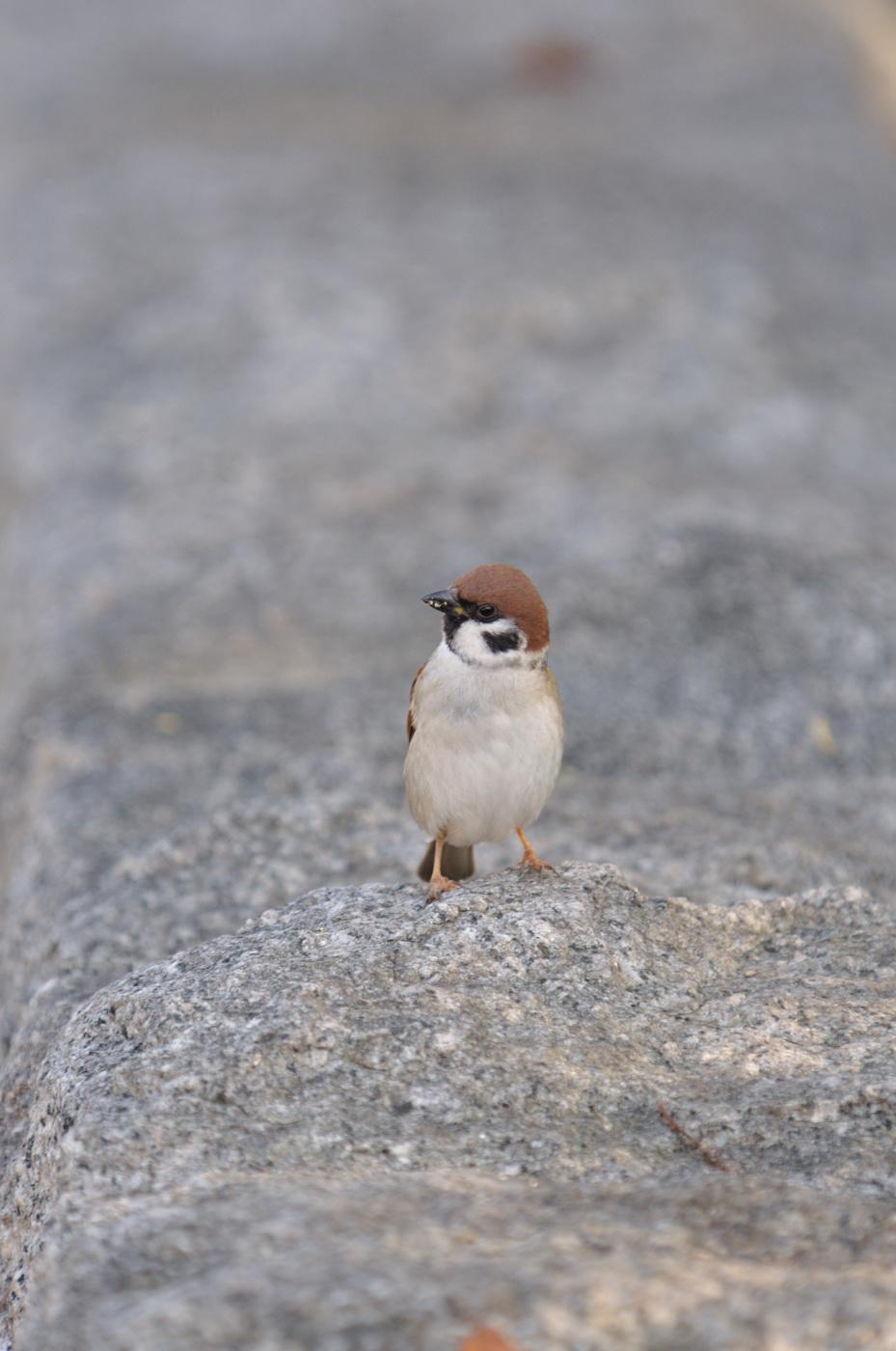 あっちこっち見る雀ちゃん