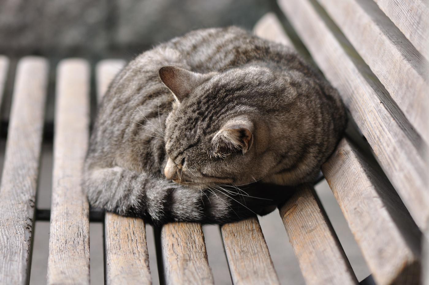丸く睡眠にゃんこ