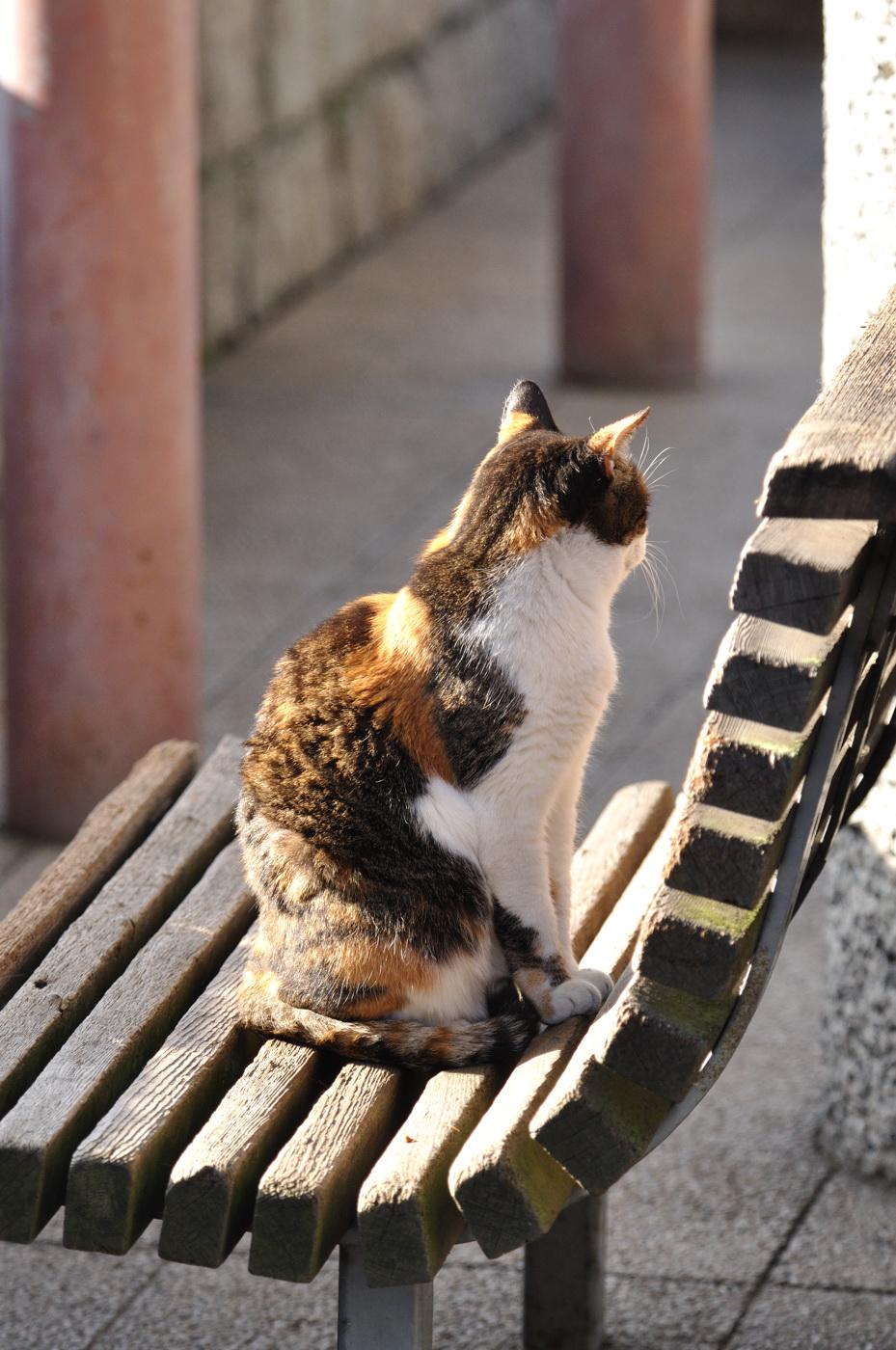 ベンチでお座りにゃんこ