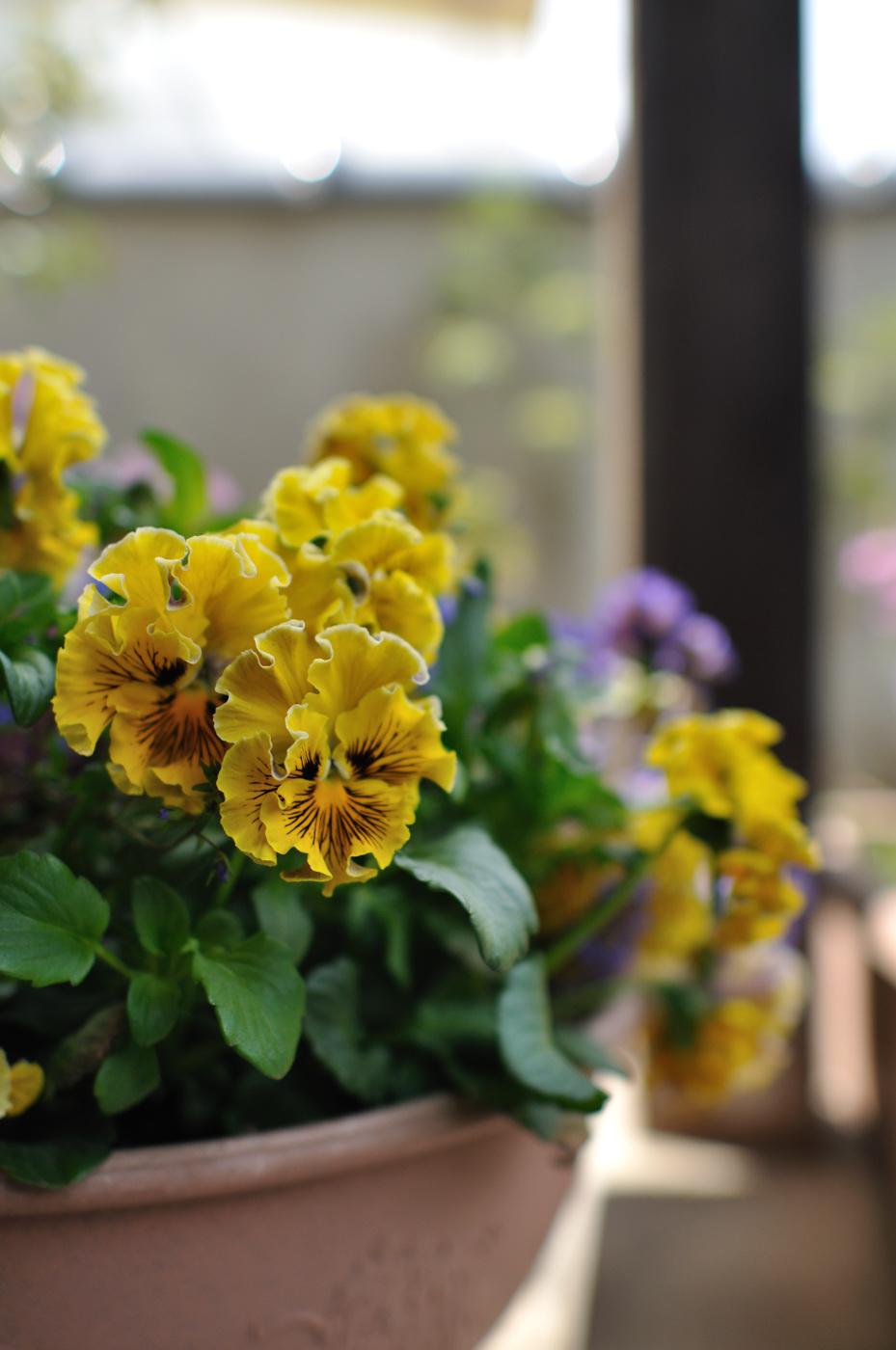 玄関のお花!パート2その2