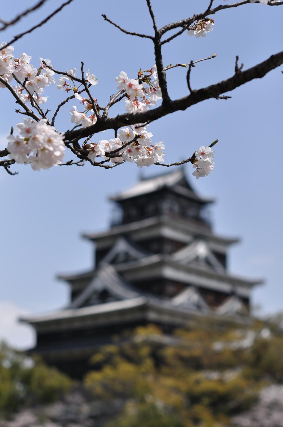 桜と広島城のボケ