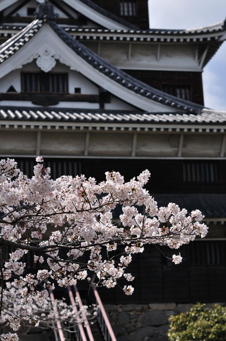 桜とちょっとボケの天守閣