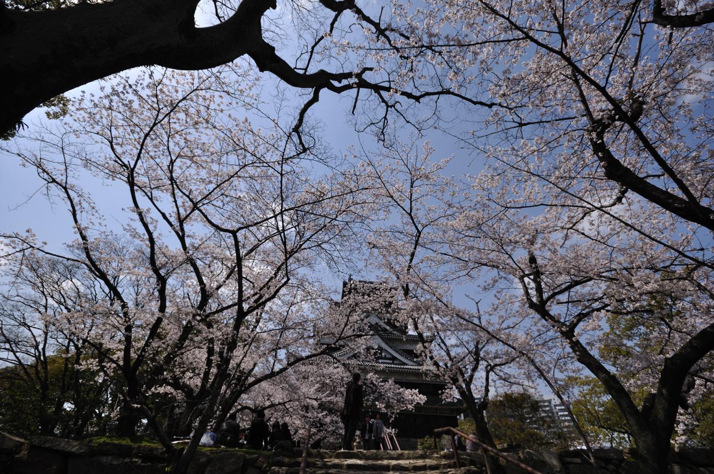 超広角な広島城と桜