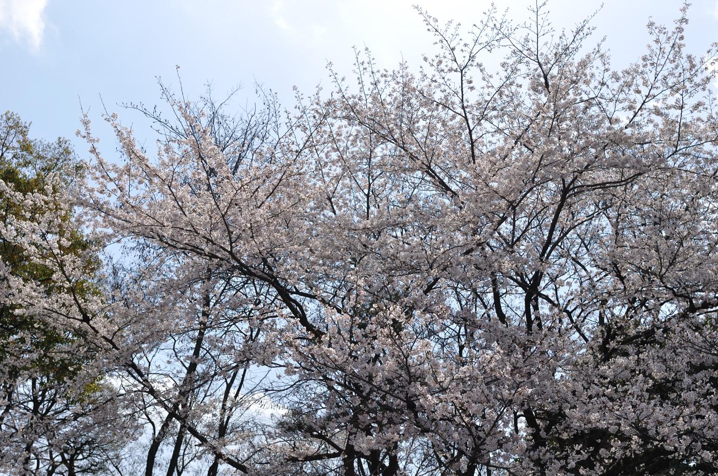 逆光桜ちゃんその1